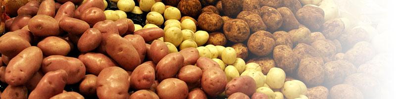 Первый в России завод по переработке картофеля запустят в Тюменской области в 2019 году