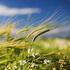 Календарь народных примет о погоде, Народные приметы предсказания погоды зимой, весной, летом, осенью